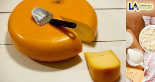 خرید عمده پنیر گودا